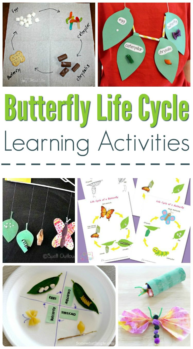 Butterfly Life Cycle Learning Activities